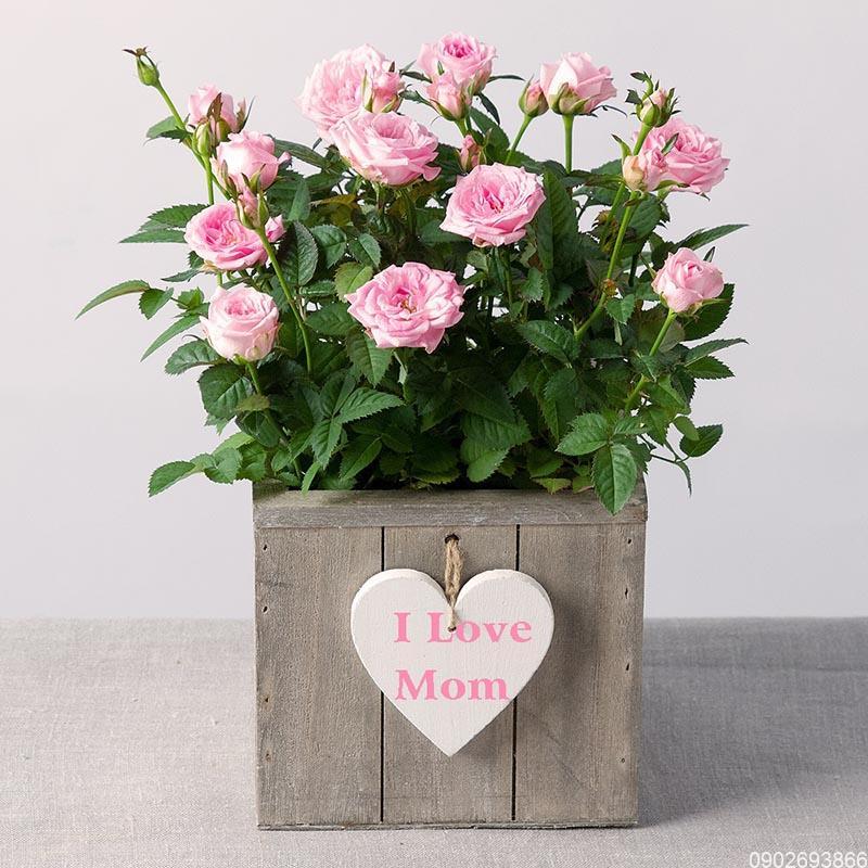 Quà tặng sinh nhật mẹ | Nên mua quà gì tặng mẹ?